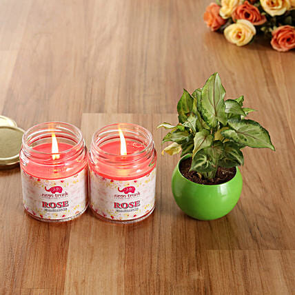 White Pothos Plant Rose Scented Candles