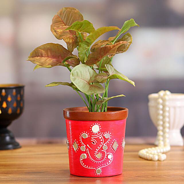 Pink Syngonium in Pink Terracotta Pot:Terracotta Planters