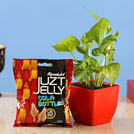 money plant juzt jelly candy combo
