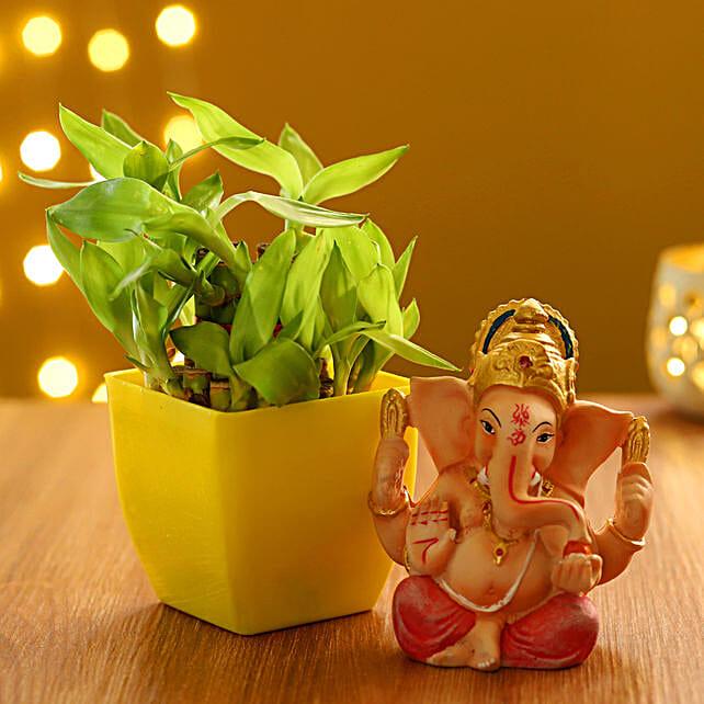 diwali plants combo for husband