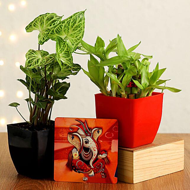 deepavali plants online