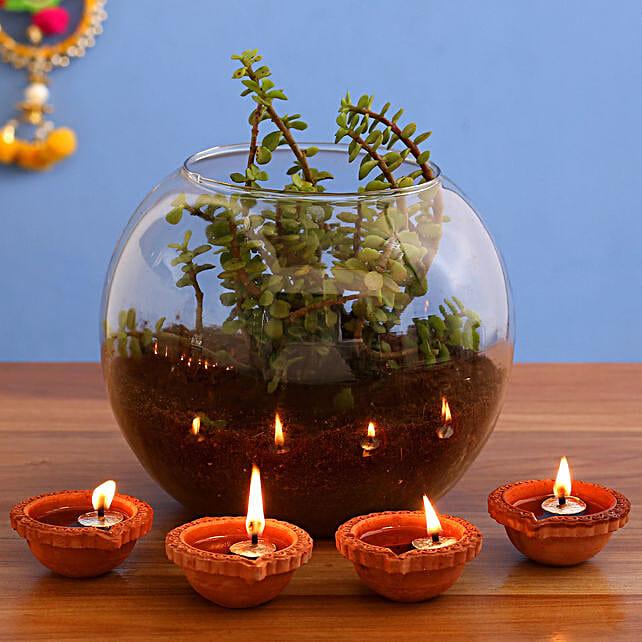 Fantastic Jade Plant Terrarium & 4  Diyas