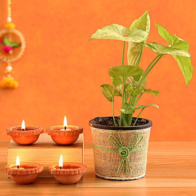 Green Syngonium Plant & 4  Diyas