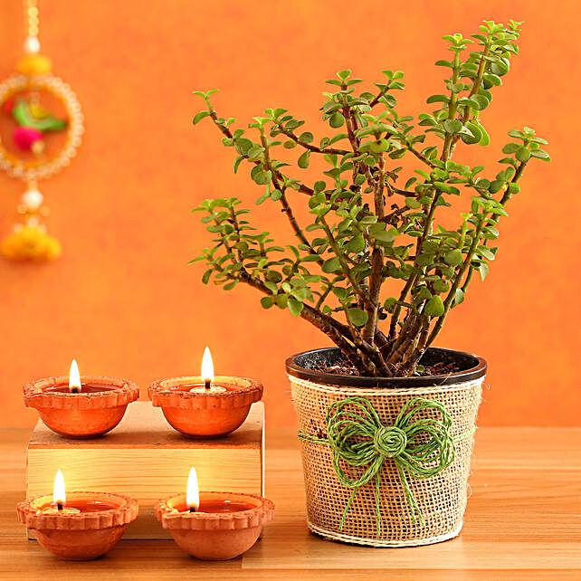 Jade Plant & 4  Diyas