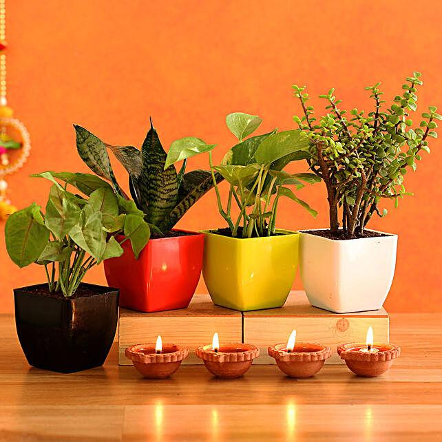 Lush Green Plants & 4  Diyas