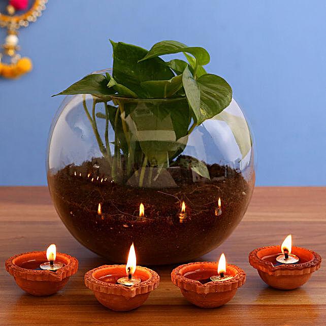 Money Plant Terrarium & 4  Diyas