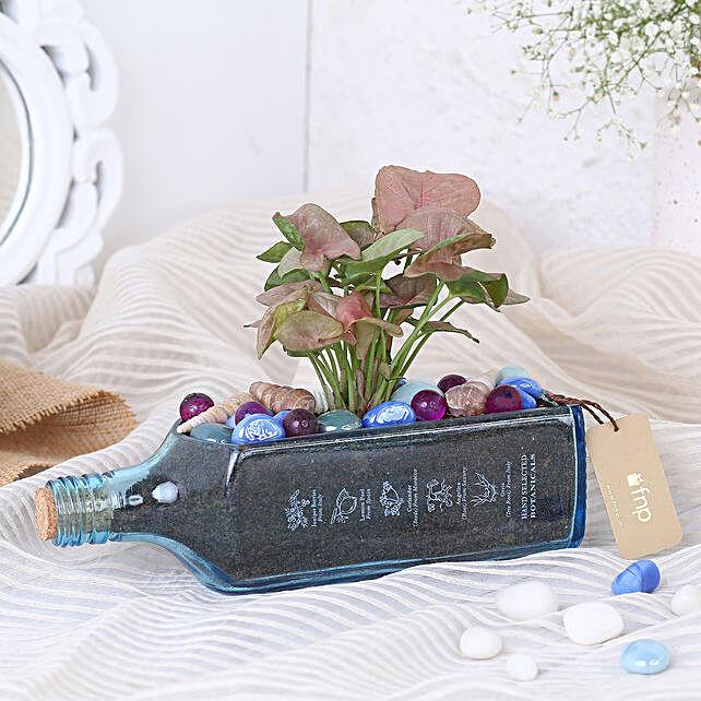 Pink Syngonium Plant In Bombay Sapphire Bottle Planter:Valentine Plants