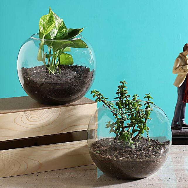 terrarium set online