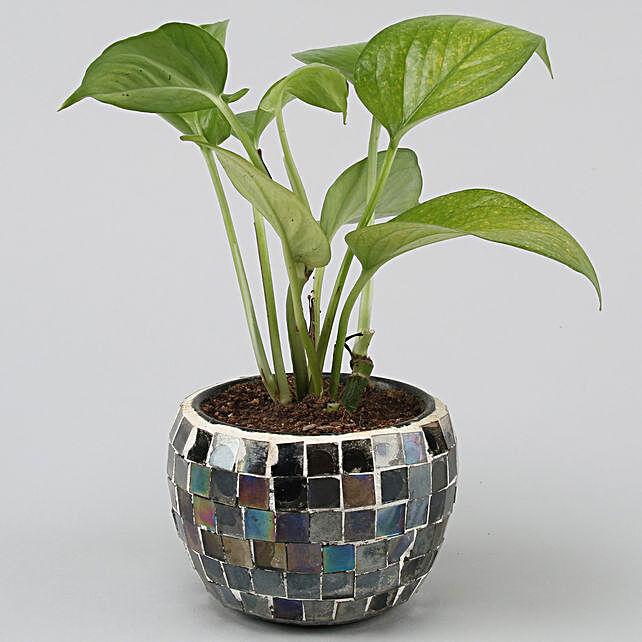 Online Money Plant In Black Mosaic Design Metal Pot:Home Decor to Delhi