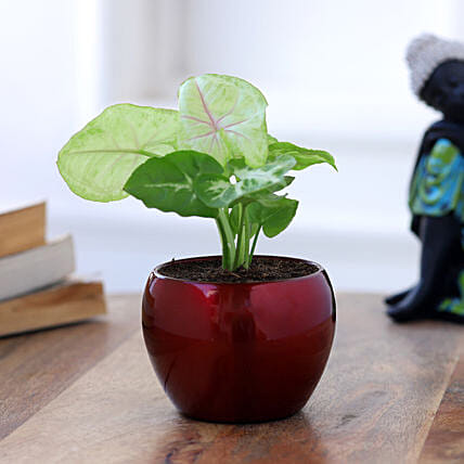 plant with metal pot online