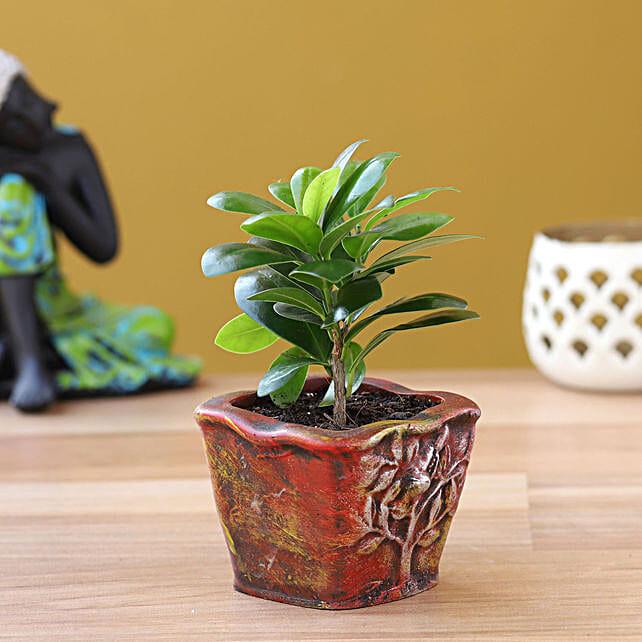 online plant in resin pot