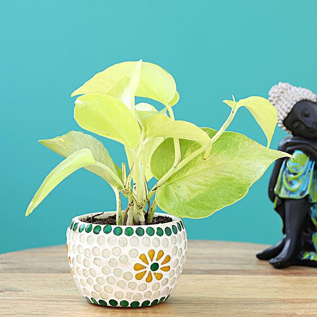 Golden Money Plant in Decorative Pot