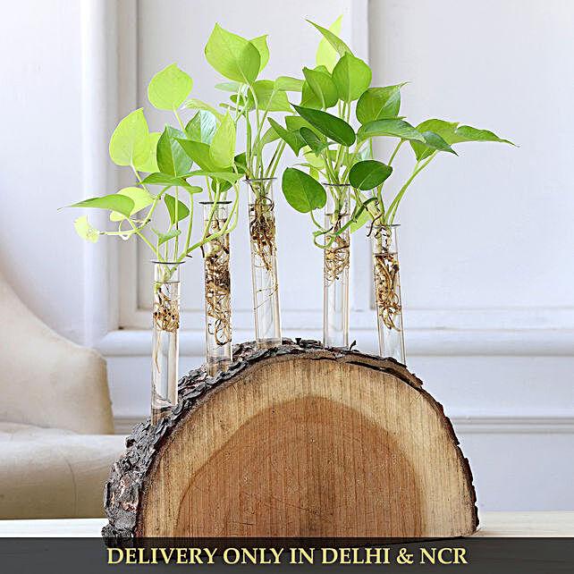 plant in wooden log online