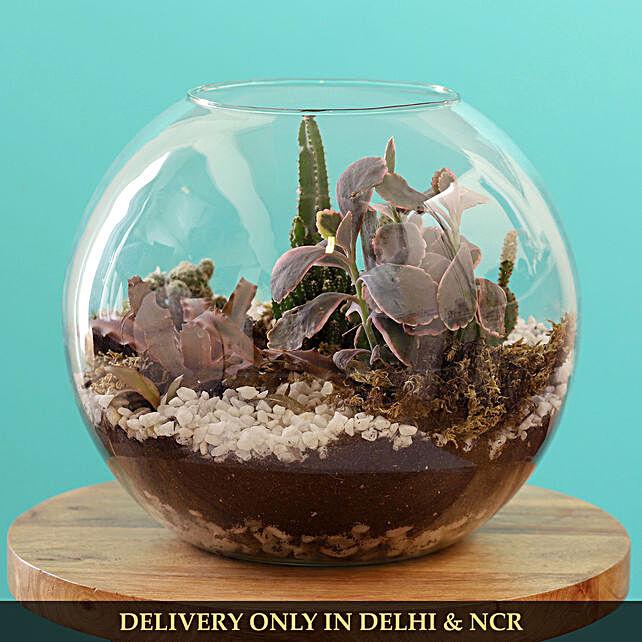cactus plant in fish bowl:Dish Gardens