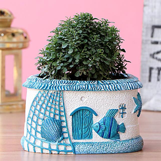 Table Kamini Plant In Sea House Planter