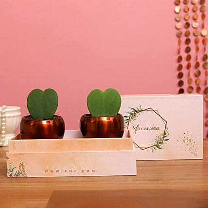 Two Hoya Plants In FNP Printed Succulent Box