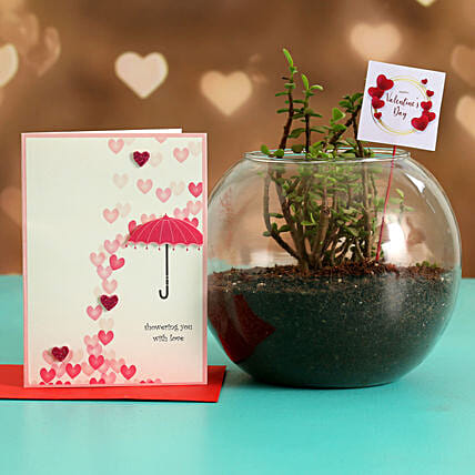 Jade Plant In Glass Vase With Greeting Card & V-Day Tag Hand Delivery