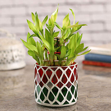 2 Layer Bamboo In Pretty Mosaic Mirror Pot:Lucky Bamboo Plants