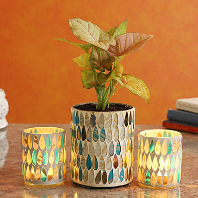 Pink Syngonium Plant In Teardrop Mosaic Vase And Votive Set