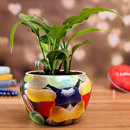 Peace Lily Plant In Pebbles Printed Pot