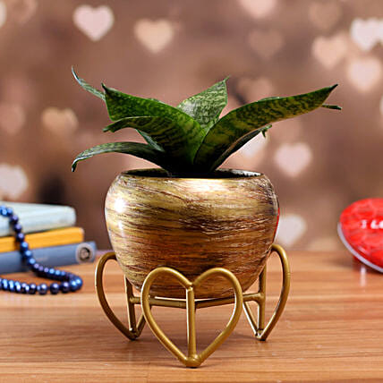 Sansevieria Green Plant In Stone Finish Stylish Pot