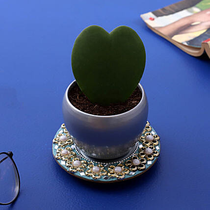 Hoya Plant In Silver Pot And Sky Beautiful Mirror Plate