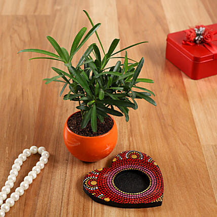 Podocarpus Plant In Orange Pot And Red Heart Plate