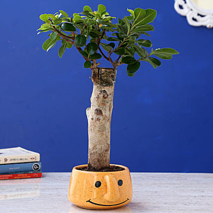 Ficus Plant in Smiley Planter