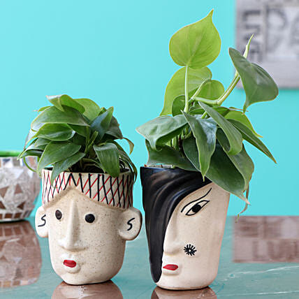 Oxycardium Plants with Planters Combo:Send Plants for Valentines Day