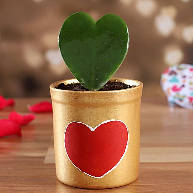 indoor plant with planter online