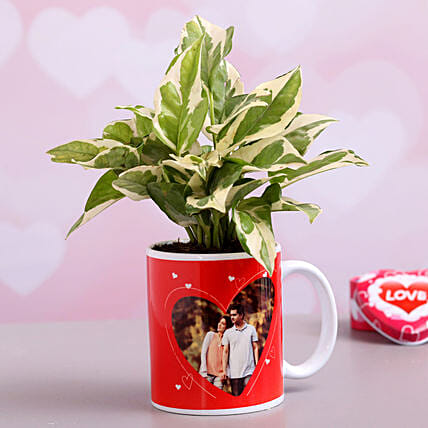 Personalised White Pothos Plant In Couple Mug Hand Delivery
