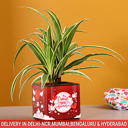 Spider Plant In Want You Forever Vase:Send Plants for Valentines Day