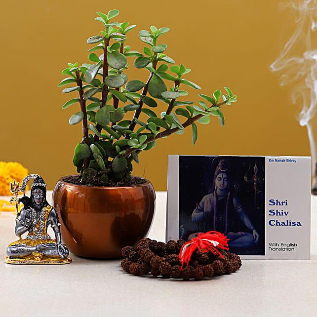 Maha Shivaratri Puja Items Jade Plant:Shivratri Gifts