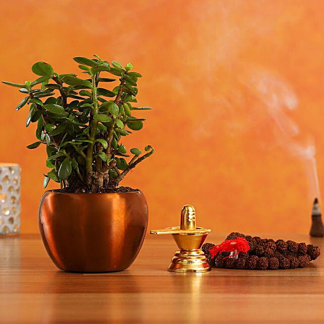 Special Shivaratri Puja Items Jade Plant:Shivratri Gifts