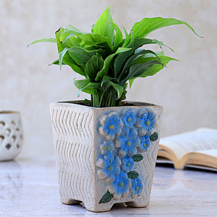 Peace Lily Plant In Flower Embossed Pot
