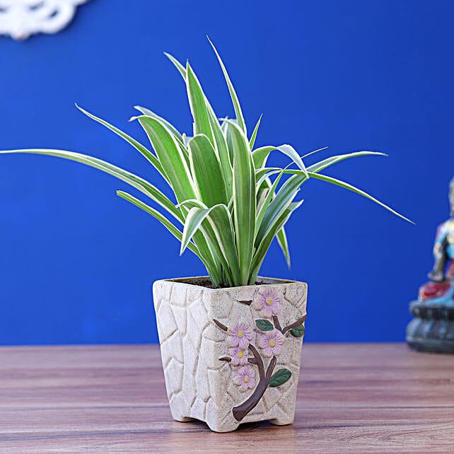 Spider Plant In Flower Embossed Pot