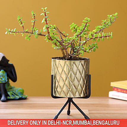 Jade Plant In Brass Powder Metal Pot Hand Delivery