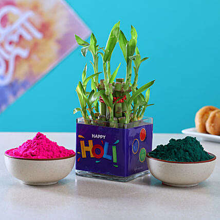 Special Holi Celebration Combo With Bamboo Plant:Holi All Gifts
