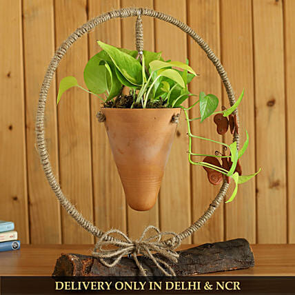 Money Plant In Conical Terracotta Pot And Iron Stand