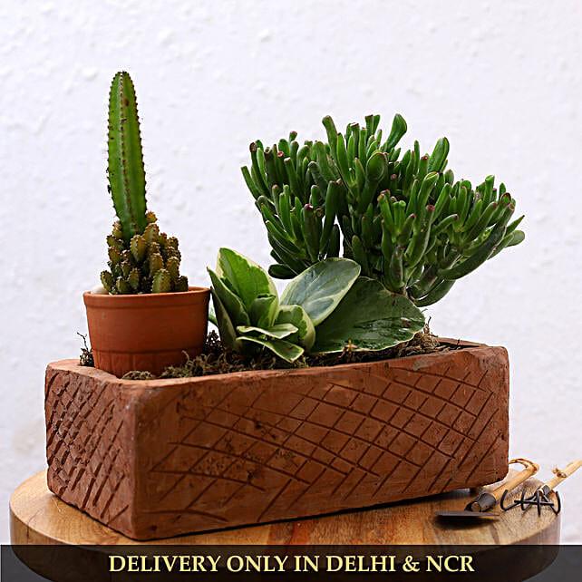 Set Of 3 Succulent Plants In Brick Shaped Planter