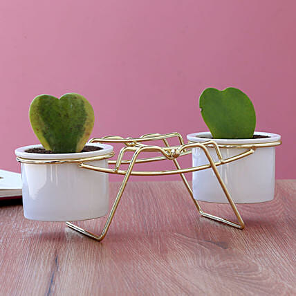 Hoya Plant Duo In Ceramic Pots With Golden Stand