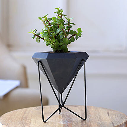 Jade Plant In Conical Pot With Stand:Planter Stands