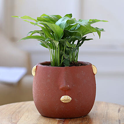 Peace Lily Plant In Red Face Ceramic Pot