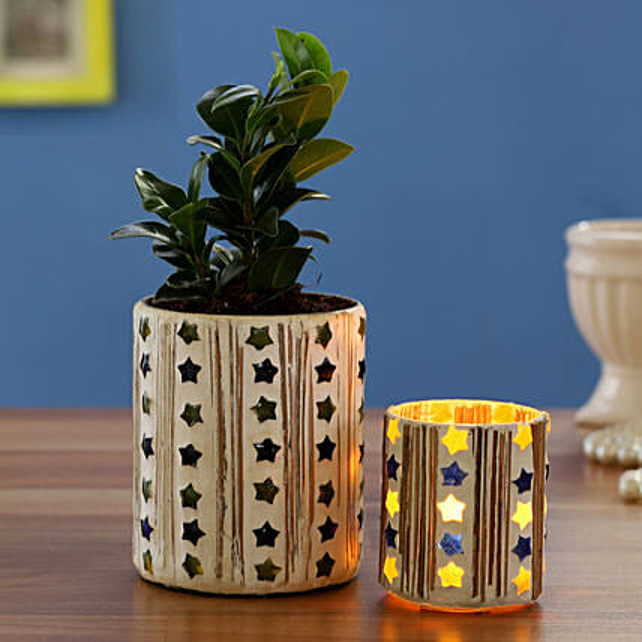 Ficus Compacta Plant In Mosaic Vase With Mosaic Votive