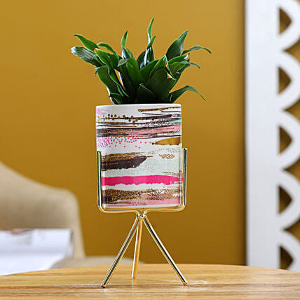 Dracena Plant In Pink White Pot With Golden Stand