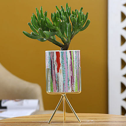 Euphorbia Sticks Plant In Ceramic Pot With Golden Stand