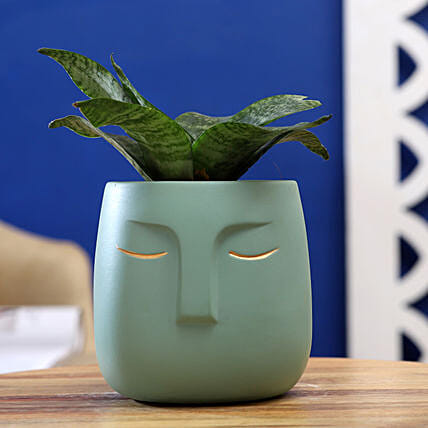 Sansevieria Green Plant In Ceramic Green Face Pot:Air Purifying Plants