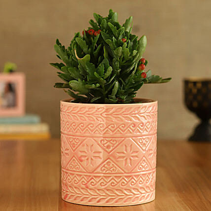 Kalanchoe Plant In Pink Pipe Shape Ceramic Pot
