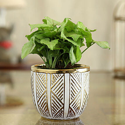 Syngonium Plant In Gold And White Oval Pot:Egyptian Art-planters