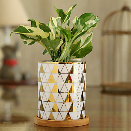 White Pothos Plant In Triangle Print Pot With Wooden Plate